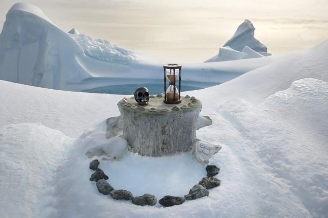 Antarctic & Southern Elephant Seal Skulls