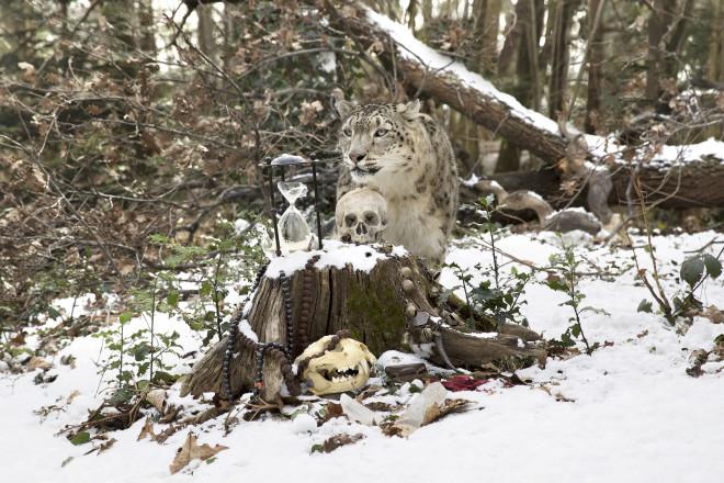 Anne de Carbuccia, Snow Leopard 2