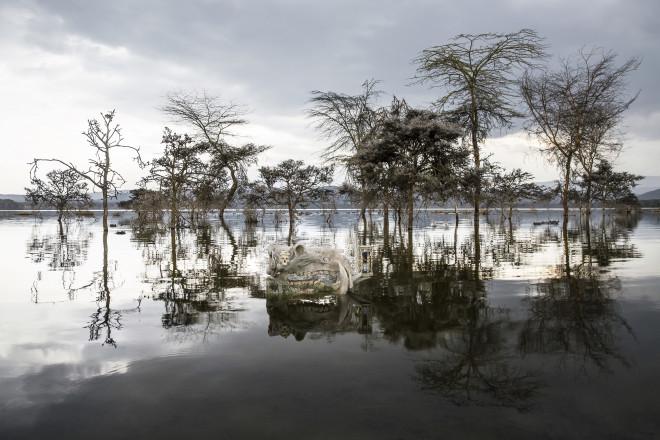Hippos & Fever Trees, Dusk
