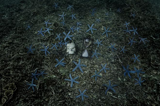 Anne de Carbuccia, Blue Stars