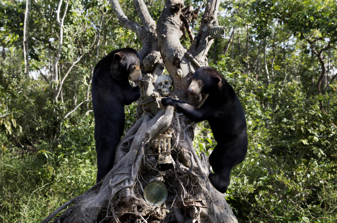 Sun Bears 1