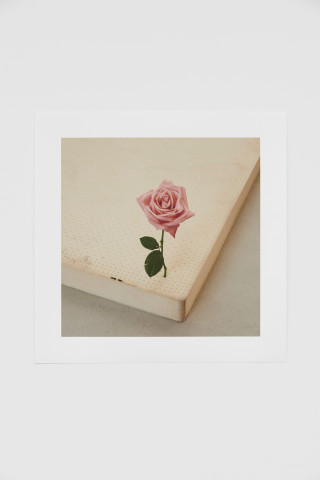 Casper Sejersen, One Perfect Rose, 2019
