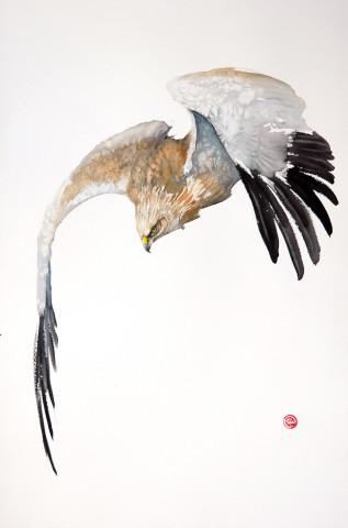 Karl Martens, Northern Harrier Flying (Unframed)