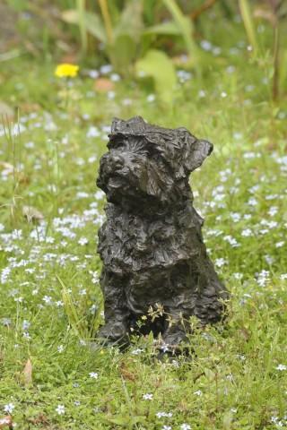 Rosemary Cook, Bramble - Norfolk Terrier