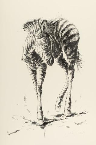 Julia Cassels, Zebra Foal (Hungerford Gallery)