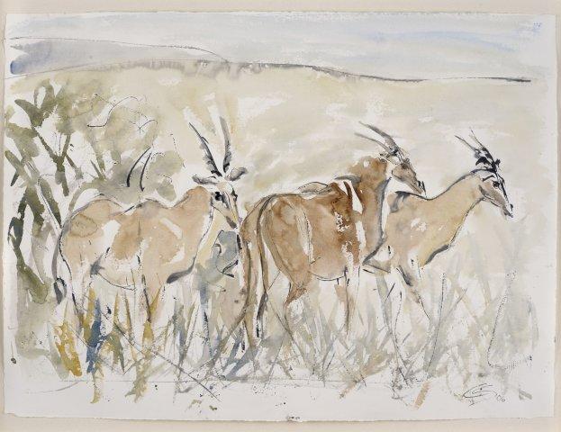 Christine Seifert, Eland Antelope (Framed) (London Gallery)