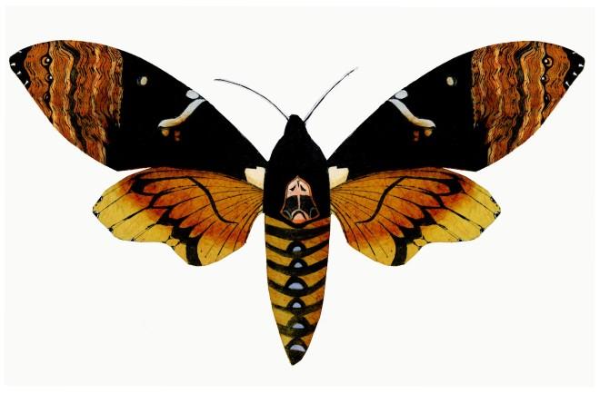 Beatrice Forshall, Hawk Moth (Unframed)