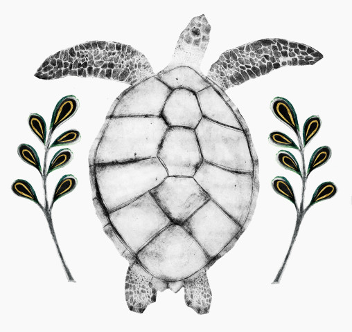 Beatrice Forshall, Hawksbill Turtle