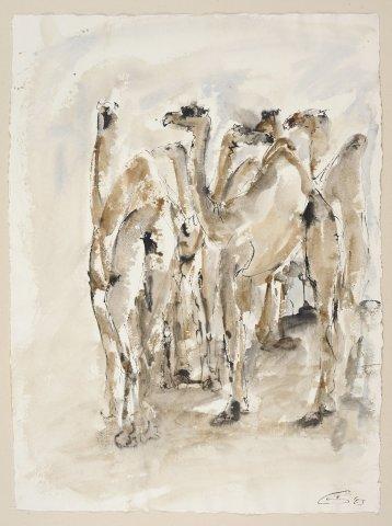 Christine Seifert, Group of Camels (Unframed) (Hungerford Gallery)