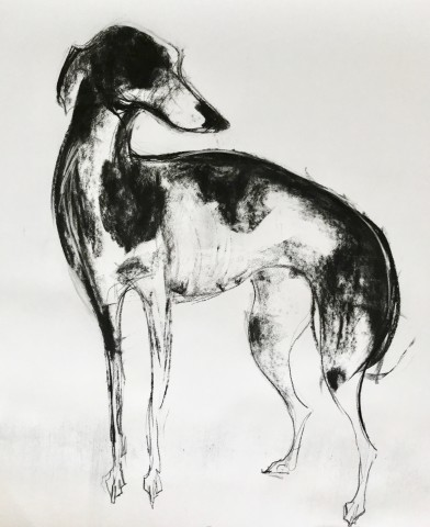 Sally Muir, Lily II (Hungerford Gallery)