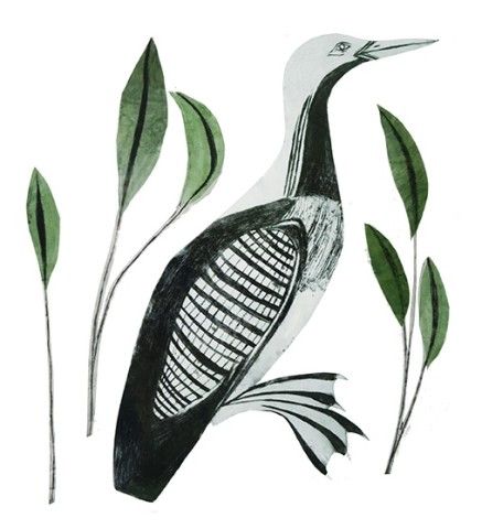 Beatrice Forshall, Black Throated Diver (Unframed)