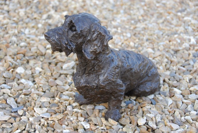 Rosemary Cook, Brillo - Wirehaired Dachshund