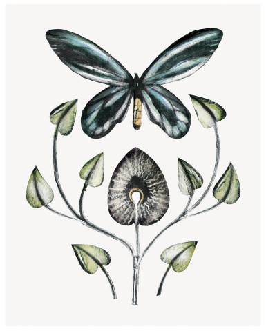 Beatrice Forshall, The Queen Alexandra Birdwing (Unframed)