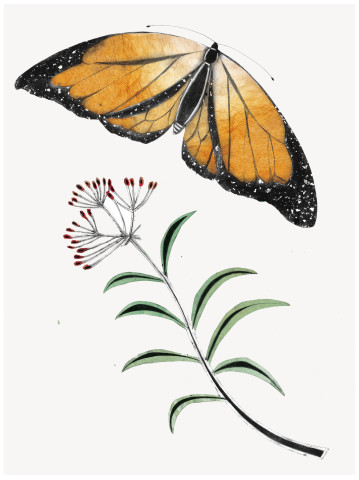 Beatrice Forshall, Monarch Butterfly (Unframed)