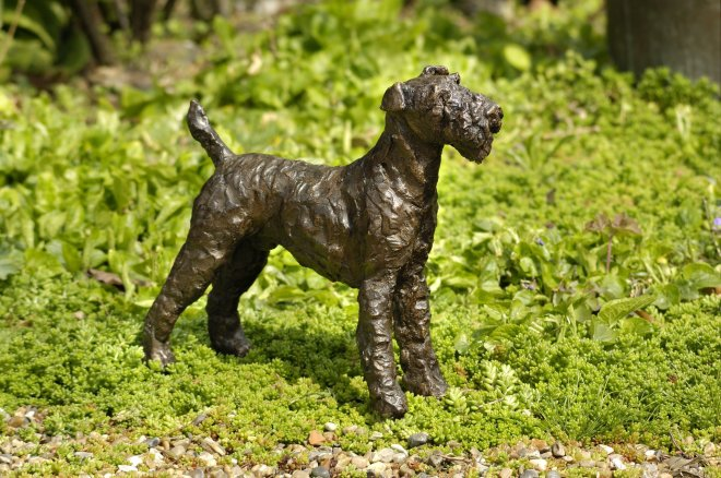 Rosemary Cook, Bob - airedale terrier
