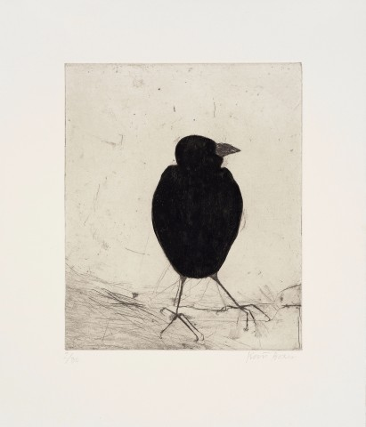 Kate Boxer, Jackdaw (Mounted)