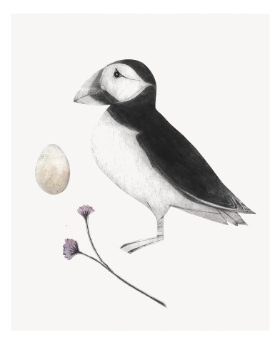 Beatrice Forshall, Puffin (Unframed)