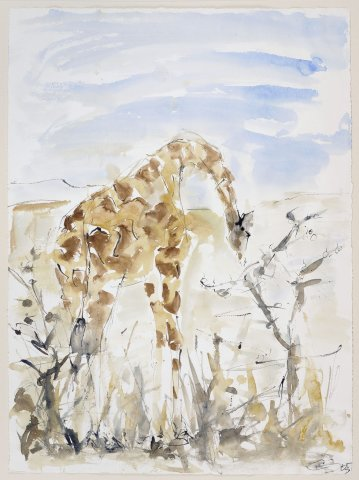 Christine Seifert, Giraffe Grazing on a Tree (Unframed) (Hungerford Gallery)