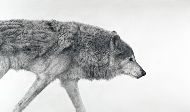 Canis Lupus I (London Gallery)