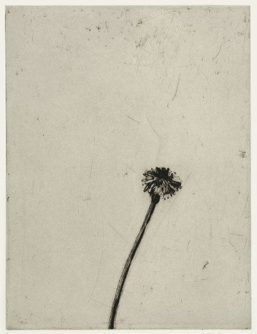 Kate Boxer, Dandelion (Mounted)