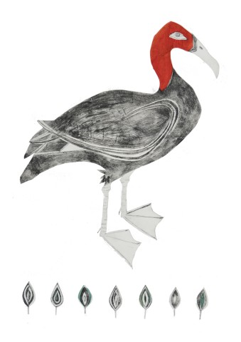 Beatrice Forshall, Pink Headed Duck (Unframed)