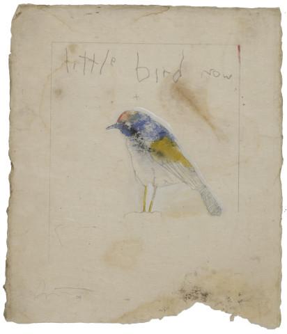 Little Bird Now