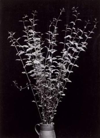 Constantin Brancusi, Branches dans une cruche, 1933 - 34