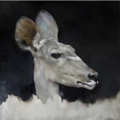 Justin Coburn, Antelope Head Study