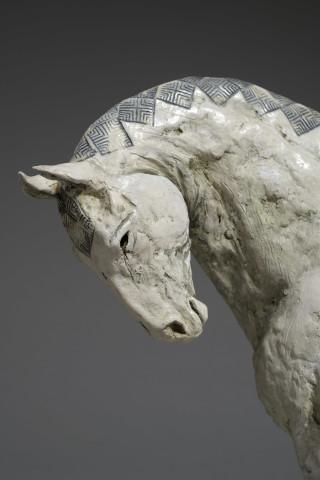 Indian Marwari Horse II
