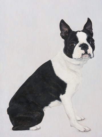 Betty Boop (Boston Terrier)