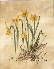 Narcissus and Oak Leaves
