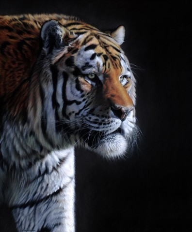 Gary Stinton, Amur Tiger