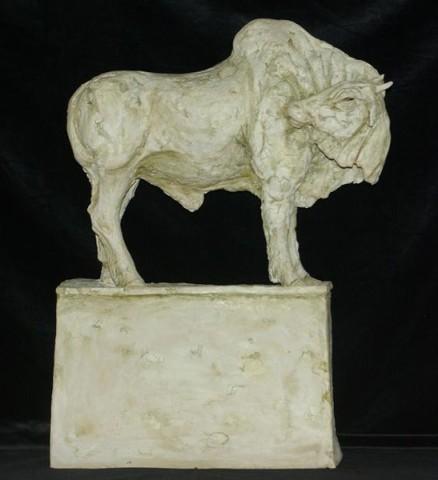 Indian Bull
