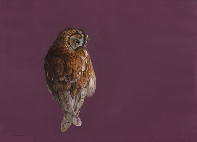 Hayward, Tim, Tawny Owl - Mulberry