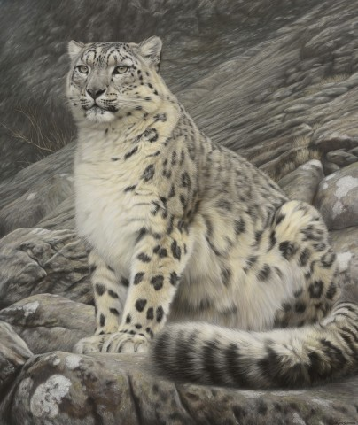 Sitting Snow Leopard