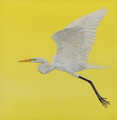 Tim Hayward, Flight - Yellow