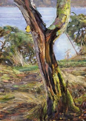 Ben Henriques, A Rotting Birch Tree