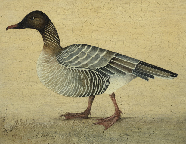 Harriet Bane, Pink Footed Goose
