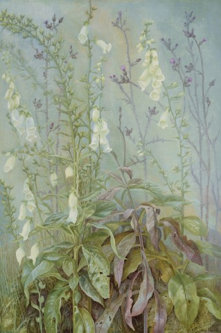 Jane Wormell, Foxgloves
