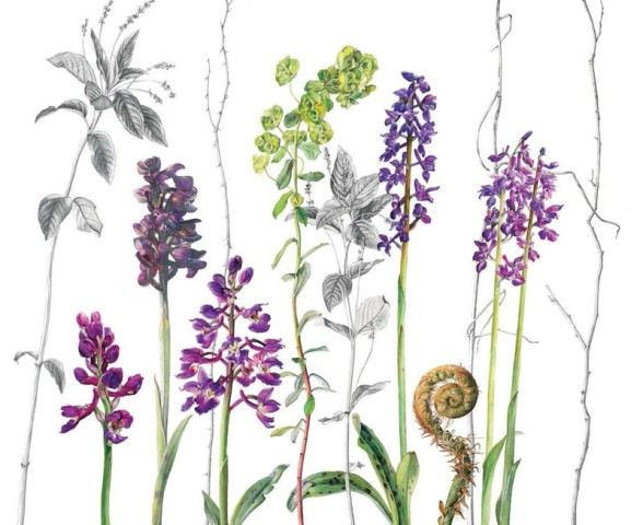 Rosie Sanders, Early Purple Orchids, Dog's Mercury and Wood Spurge