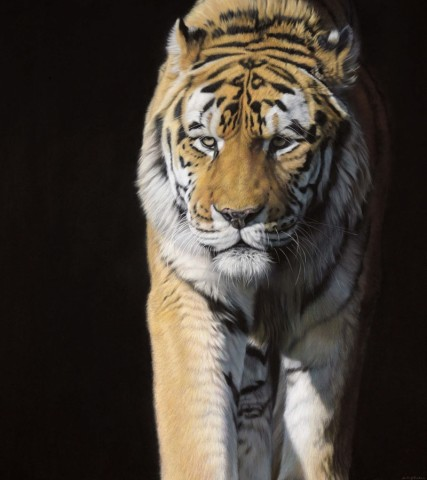Eye To Eye V - Amur Tiger