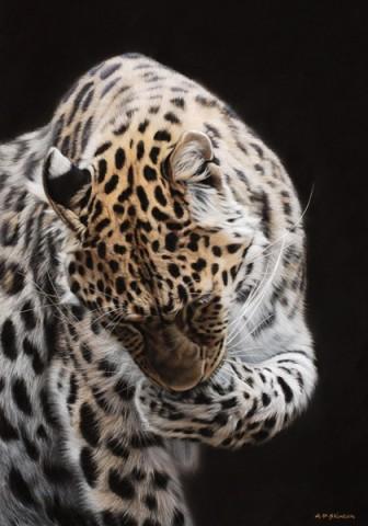 Amur Leopard Grooming