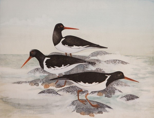 Three Oystercatchers
