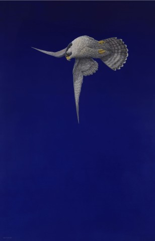 Tim Hayward, Blue Stoop