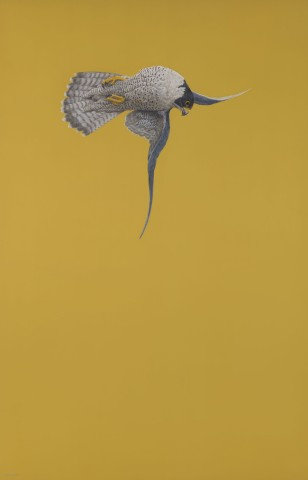 Tim Hayward, Yellow Stoop (Peregrine Falcon)