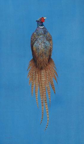 Hayward, Tim, Ring-Necked Pheasant - Azure
