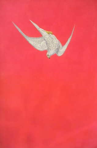 Pink Swoop (Gyrfalcon)