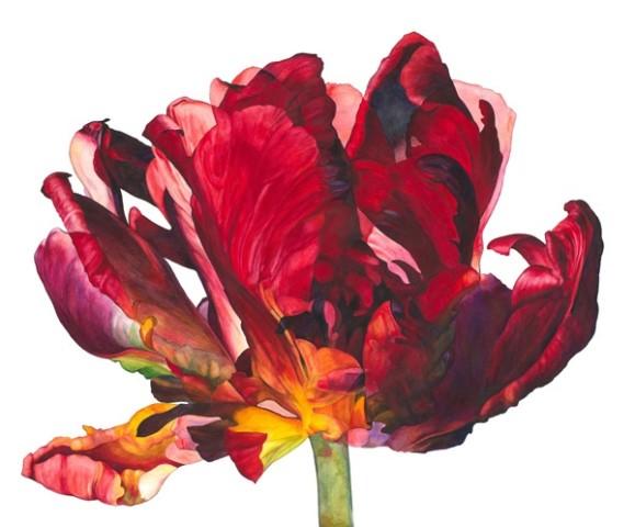Rosie Sanders, Flowering II