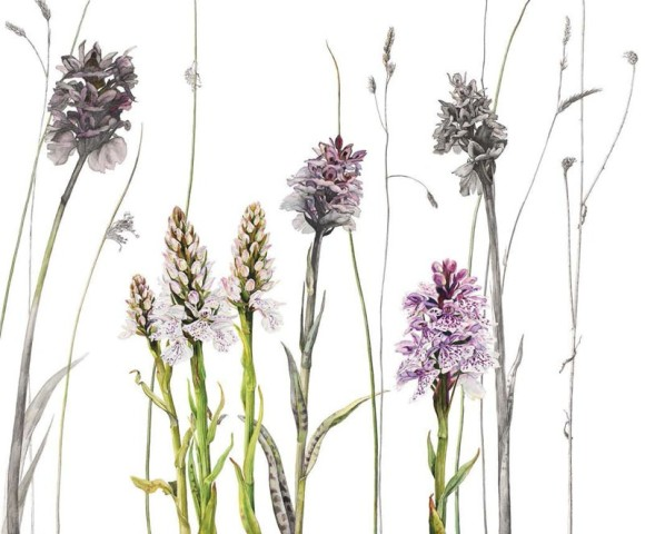 Heath spotted orchids and grasses