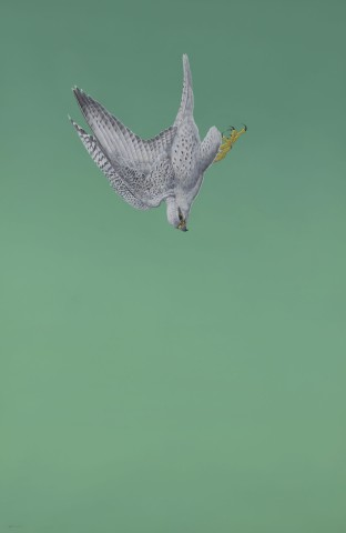Green Swoop (Gyrfalcon)